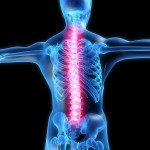 YOGA AND THE HEALTH OF OUR SPINES